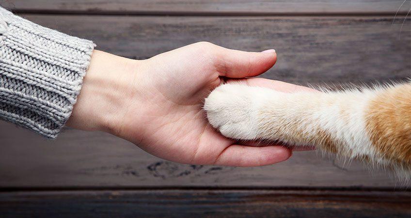 CBD PET SALVE PROTECTS PETS